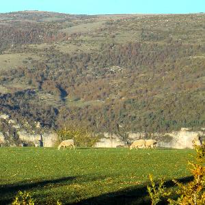 Paysage Saint-Sauveur-du-Larzac